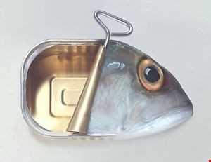 Akai & Saltfish