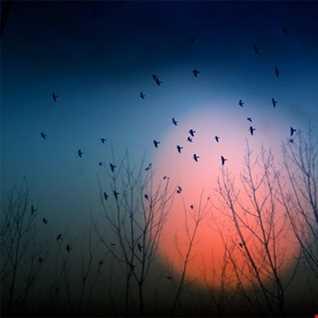 Dawn Chorus