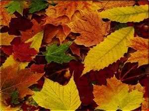 Soundz 4 Da Fall Harvest vol.2