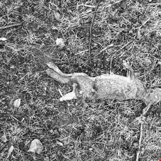 Dead Rabbit's Easter Remix