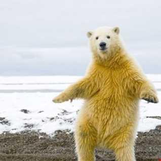 Smoove Bear's  Bear faced Boogie