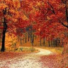 Mattjfromwey   Autumn Mix