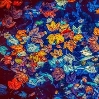 Uplifting & Vocal Trance - Autumn Leaves