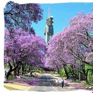Spring in SA