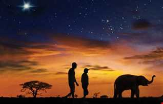 Counting Down The Days Elephants In The Night