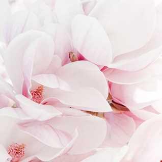 Par Grindvink with....Magnolia...remake by Willian J.