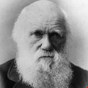 Martin J The Theory Of Darwin