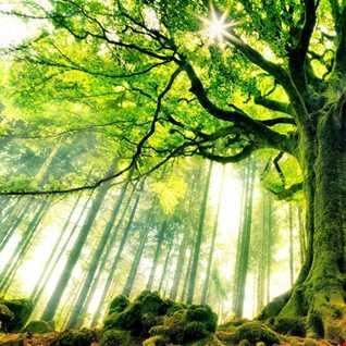 Tree may fifteen