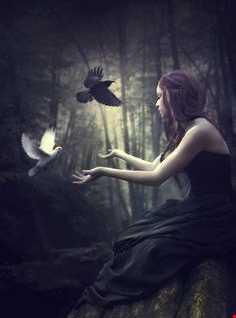 Dense Forest Rhythms