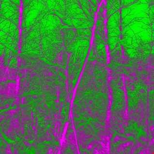 Dj Indica   Forest on Acid