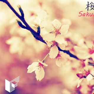 Sakura 桜