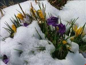 ReeGee´s Frühlingserwachen Mix