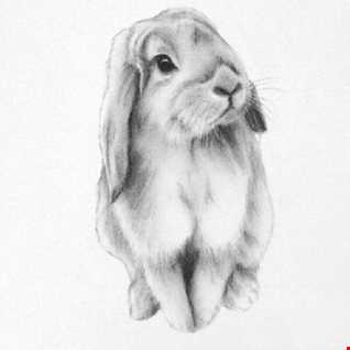 Luigi the Lop eared Rabbit