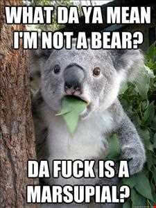 Koala (Happy House)
