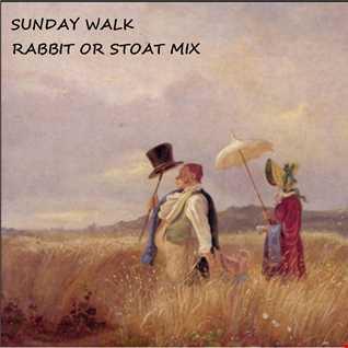 Sunday Walk: Rabbit or Stoat Mix