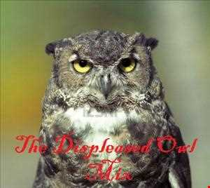The Displeased Owl Mix