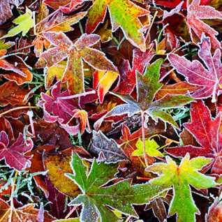 autumn colours part 2
