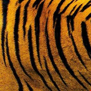 Tiger Skin Razor Teeth