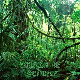 12th November 2019 Exploring the Rainforest