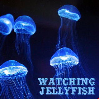 1st March 2020 Watching Jellyfish