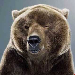 House Bear 8