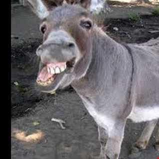 The Donkey Of Unsound Mind mix