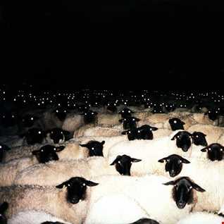Kap-U - the Planet of the Sheeps