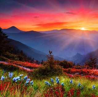 sunshine valley mix