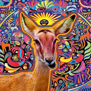 ANTELOPE  -  TRIBAL ETHNIC MELODIC HOUSE EXPERIENCE