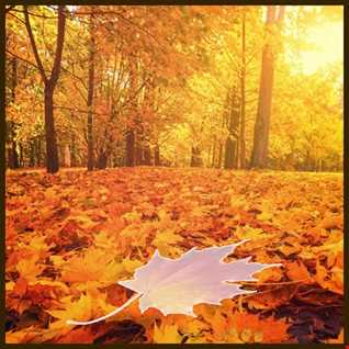 AUTUMN -  DEEPHOUSE AND PROGRESSIVE GOING RELAX